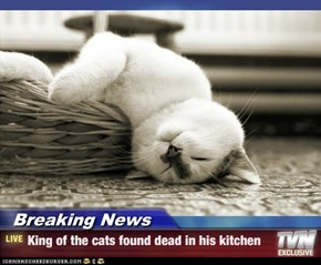 Breaking News - King of the cats found dead in his kitchen