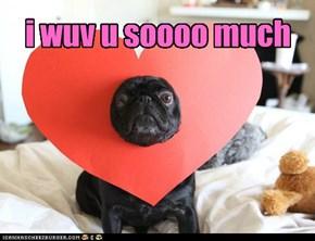 Valentine's Day Pug: i wuv u