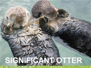 SMP CLASSIC: Otterly Inseparable