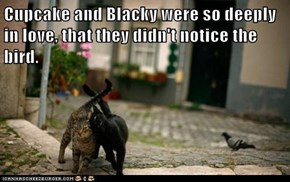 Cupcake and Blacky were so deeply in love, that they didn't notice the bird.