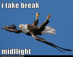 i take break  midflight