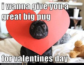 Valentine's Day Pug: i wanna give you