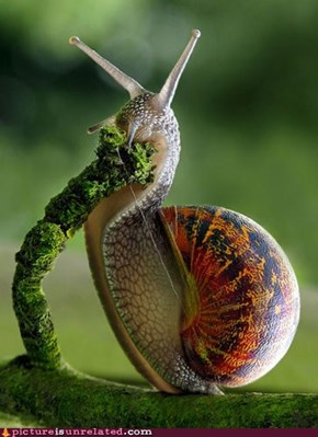 Hungry Hungry Snail