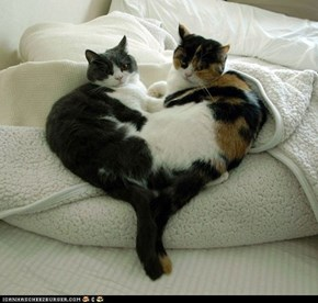 Cyoot Kittehs of teh Day: We Made You This Heart for Valentine's Day