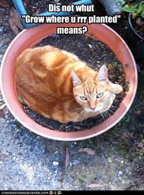 "Dis not whut ""Grow where u rrr planted"" means?"