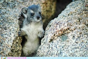 Squee Spree: On the Rocks