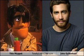 This Muppet Totally Looks Like Jake Gyllenhaal