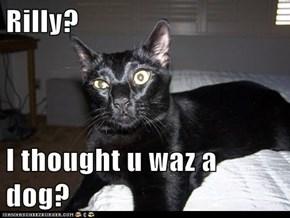 Rilly?  I thought u waz a dog?