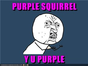 PURPLE SQUIRREL  Y U PURPLE