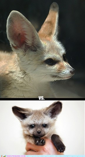 Squee Spree: Fennec Foxes Vs. Bat-Eared Foxes!