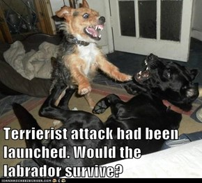 Terrierist attack had been launched. Would the labrador survive?