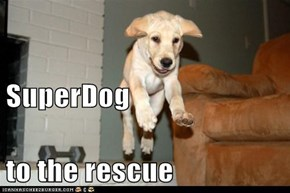 SuperDog  to the rescue