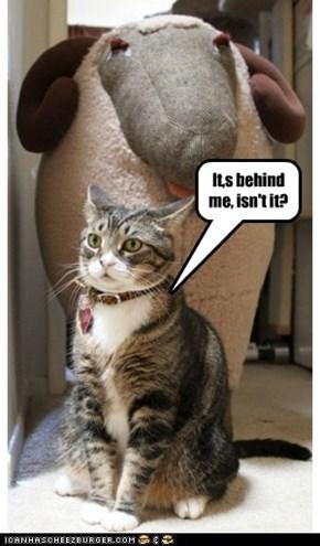Perceptive cat is perceptive