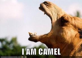 I AM CAMEL