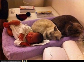 Cyoot Kittehs of teh Day: One of These Things Is Not Like the Other