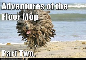 Adventures of the Floor Mop