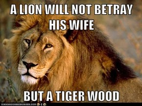 A LION WILL NOT BETRAY HIS WIFE  BUT A TIGER WOOD