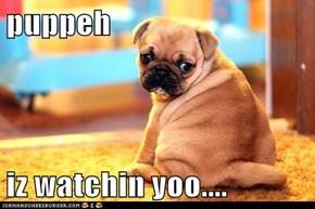puppeh  iz watchin yoo....
