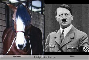 this horse Totally Looks Like hitler