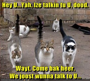 Hey U...Yah, Ize talkin tu U, dood.   Wayt. Come bak heer.                        We joost wunna talk to U...