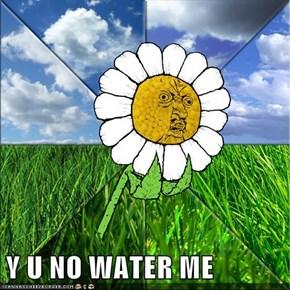 Y U NO WATER ME