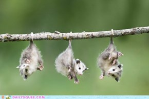 Daily Squee: Come Hang Out With Us!