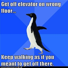 Animal Memes: Socially Awkward Penguin - Now Where Are the Stairs Again?
