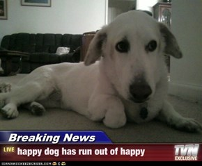 Breaking News - happy dog has run out of happy