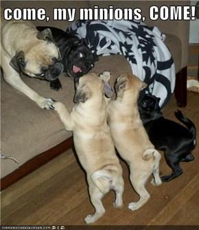 come, my minions, COME!