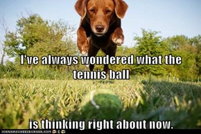 I've always wondered what the tennis ball is thinking right about now.