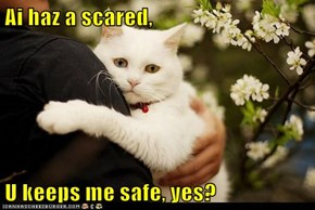 Ai haz a scared,  U keeps me safe, yes?