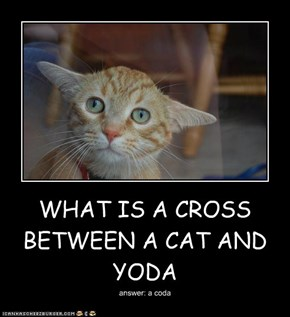 WHAT IS A CROSS BETWEEN A CAT AND YODA