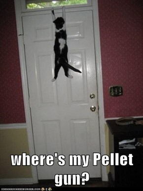 where's my Pellet gun?