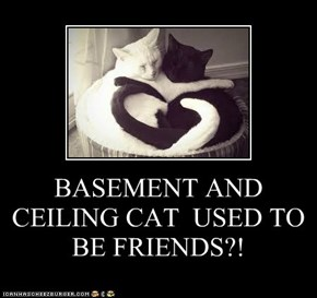 BASEMENT AND CEILING CAT  USED TO  BE FRIENDS?!