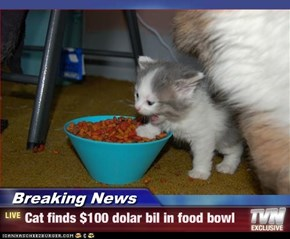 Breaking News - Cat finds $100 dolar bil in food bowl