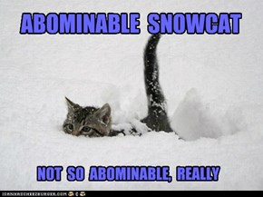 ABOMINABLE  SNOWCAT