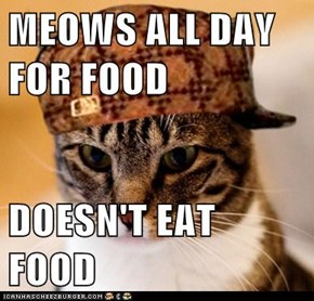 Animal Memes: Scumbag Cat - Making Sure You Know Your Place