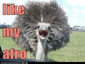 like my afro