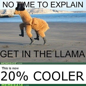 This Llama is 20% cooler