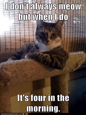 Animal Memes: The Most Interesting Cat in the World - Maybe He's Got Something Important to Say