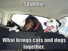 SQURRIL!  What brings cats and dogs together.