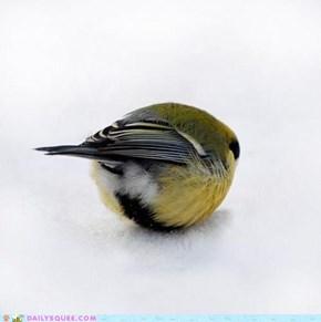 Ball o' Bird