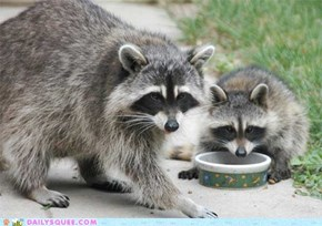 Squee Spree: Bandits Steal the Winning Spot!