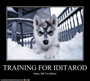 TRAINING FOR IDITAROD