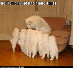 No! You can not haz 'alone' time!
