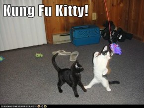 Kung Fu Kitty!