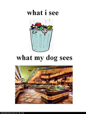 What I See vs What My Dog Sees