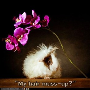 """My hair muss-up?"""