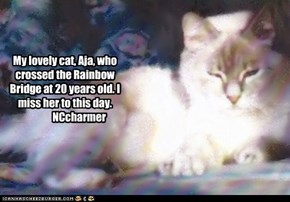 My lovely cat, Aja, who crossed the Rainbow Bridge at 20 years old. I miss her to this day.               NCcharmer