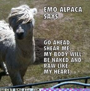llama haz feelings too